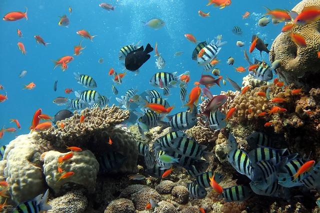 Sharm El-Sheikh mare più bello